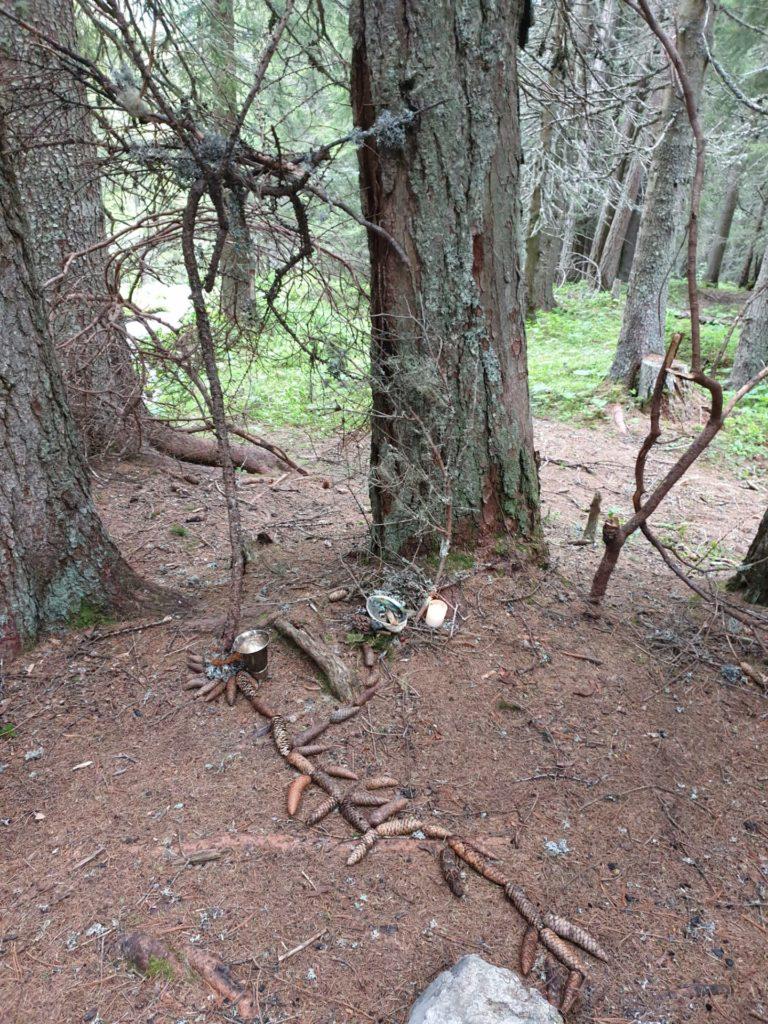 stage de chamanisme en forêt dans les Alpes